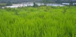 Fazenda Barata em Paraíso do Tocantins