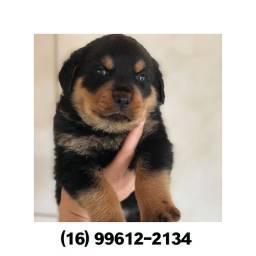 Rottweiler com pedigree e microchip até 18x