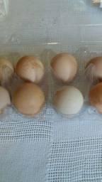 Ovos de angola