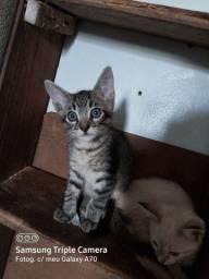 Doa-se essa gatinha linda.