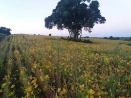Fazenda 210 alqueires