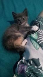 Lindas gatinhas filhotes para adoção responsável