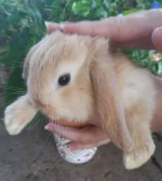 Promoção de fim de semana - filhotes coelhos