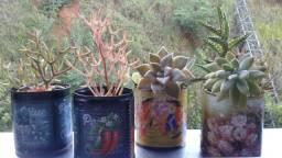 Suculentas em Vasos Decorados