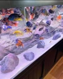 Título do anúncio: Substrato aquarios vários modelos .