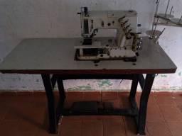 Máquina de costura elastiquera