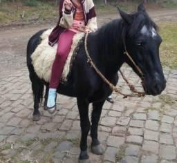Cavalo, pitiça,domada, mansa.