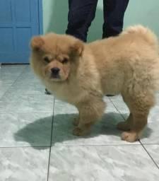Vendo cachorro