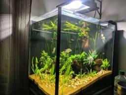 Aquario completo 120 litros