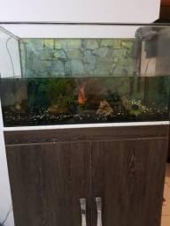 Vendo aquário 160 litros