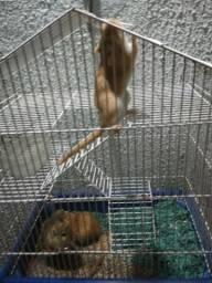 3 gerbil mais gaiola