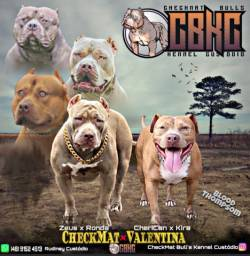 American Bully Pit Monster