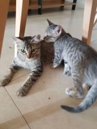 Adoção conjunta responsável - mãe castrada e filhote fêmea