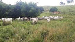 Fabio Paes Imóveis - Fazenda 62 alq - Temos fazenda em todo o Rio