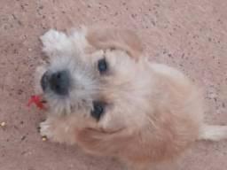 Estou doando um cachorro porte pequeno macho