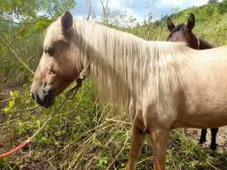 Vendo  égua mais potra de 1 ano e 7 meses