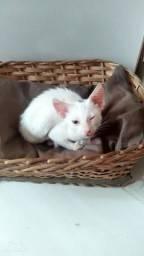Urgente precisa de um lar essa gatinha