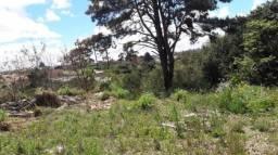 Terreno residencial à venda, colônia rio grande, são josé dos pinhais.