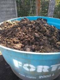 1 tonelada de esterco bovino