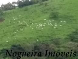 Fazenda com 421 alqueires em Adrianópolis - PR (Nogueira Imóveis Rurais)