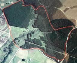 Área Rural com Pinheiros