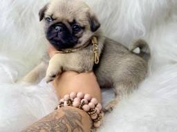Fofíssimo baby de Pug com Pedigree