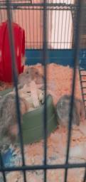 Título do anúncio: Filhotes de hamster