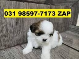 Canil Filhotes Cães Belíssimos BH Lhasa Bulldog Shihtzu Yorkshire Pug Beagle Maltês