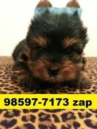 Canil Maravilhosos Filhotes Cães BH Yorkshire Maltês Beagle Lhasa Pug Shihtzu Fox