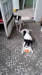 Dois cachorrinhos vira-latas