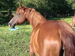 Égua QM