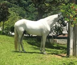 Cavalo de picado, inteiro