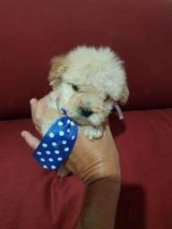 Poodle micro mini 0