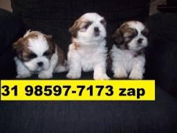 Canil Lindos Filhotes Cães BH Shihtzu Basset Poodle Beagle Yorkshire Maltês Lhasa