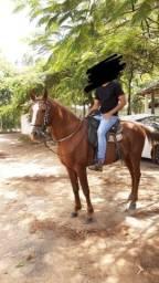 Cavalo macha batida 6 anos