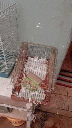 Gaiola para transporte de roedor