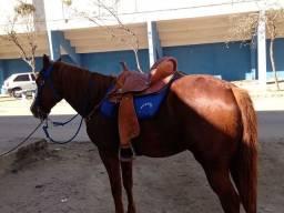 Título do anúncio: Cavalo 1/4 milha