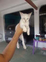 Doa-se gatinha fêmea filhote