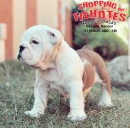 Bulldog Inglês temos 7 clinicas para atender o seu filhote, 6 meses gratuito(11)94825-6861