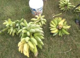 Banana Pacovan | Zona Norte