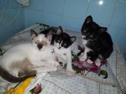 Animais para adoção