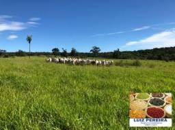 FAZENDA A VENDA EM CARACOL - MS - DE 288 HECTARES (Pecuária)