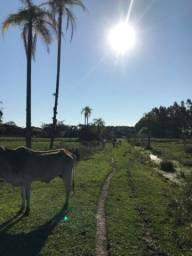 Terreno á Venda - São João do Sul