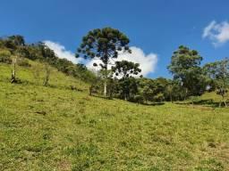 Sitio de 3 Alqueires em Cambuí - Minas Gerais