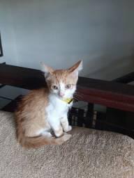 Gatinho lindo para adoção