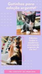 Título do anúncio: Filhotes de gatinhos lindos e saudáveis