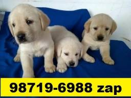 Canil Filhotes Cães BH Top Labrador Golden Pastor Akita Boxer Rottweiler