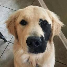 Cachorro Saudável