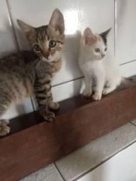 Doa-se um casal de gato