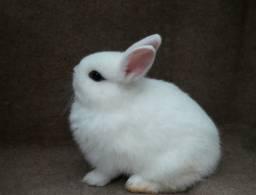 Mini coelhos.jr